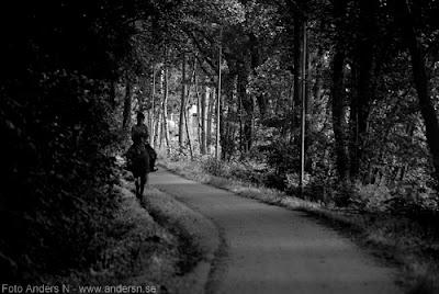 häst, ryttare, ryttarinna, mörk väg, skog, skogsväg, foto anders n