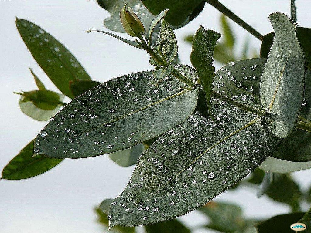 Historias chukutas las 10 plantas medicinales mas usadas for Manzanilla planta medicinal para que sirve