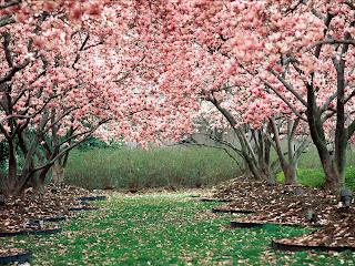 Wallpaper of Spring