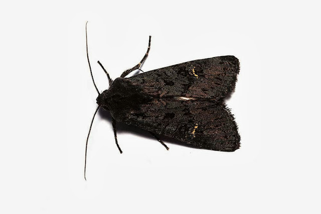 Black Rustic - Top view - Photographed in Milton Keynes