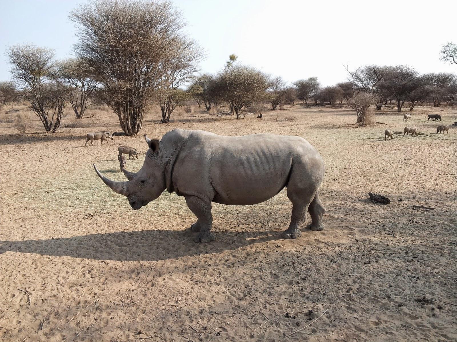 Namibian rhino - www.namibweb.com