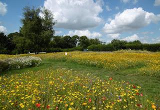 Photo of Luton Mini Golf Meadows in Wardown Park
