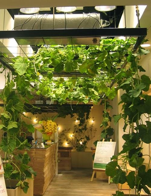 13-Urban-Farm-Building-Architects-Kono-Designs-Pasona-Group-www-designstack-co