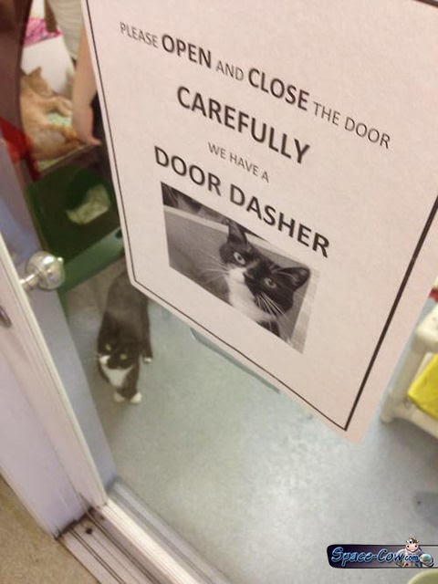 funny cute cats sign