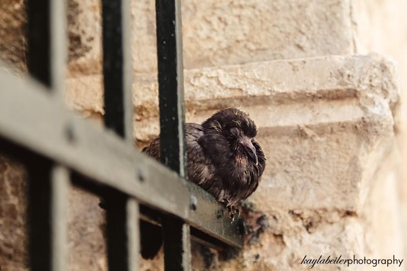perched bird photo