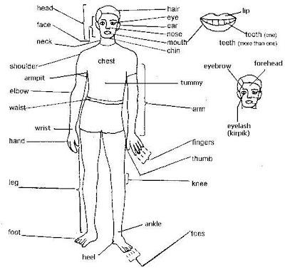 vücudun bölümleri
