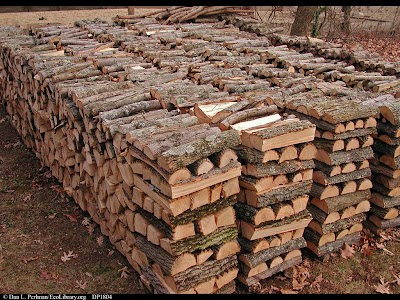 Wisconsin DNR tightens firewood rules to slow wood pests travel