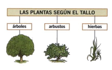 Un mundo por descubrir p5 2014 15 clasificando las plantas for Clasificacion de las plantas ornamentales