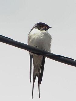 Μερικά από τα αποδημητικά πουλιά που