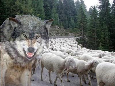Chi pecora si fa il lupo se la mangia - Cosa mangia un cucciolo di talpa ...