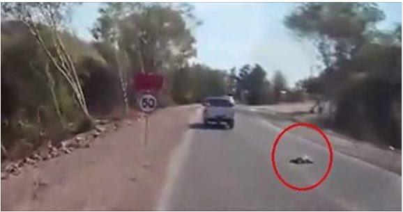 بالفيديو..  رضيع يسقط من شاحنة والديه على الطريق السريع