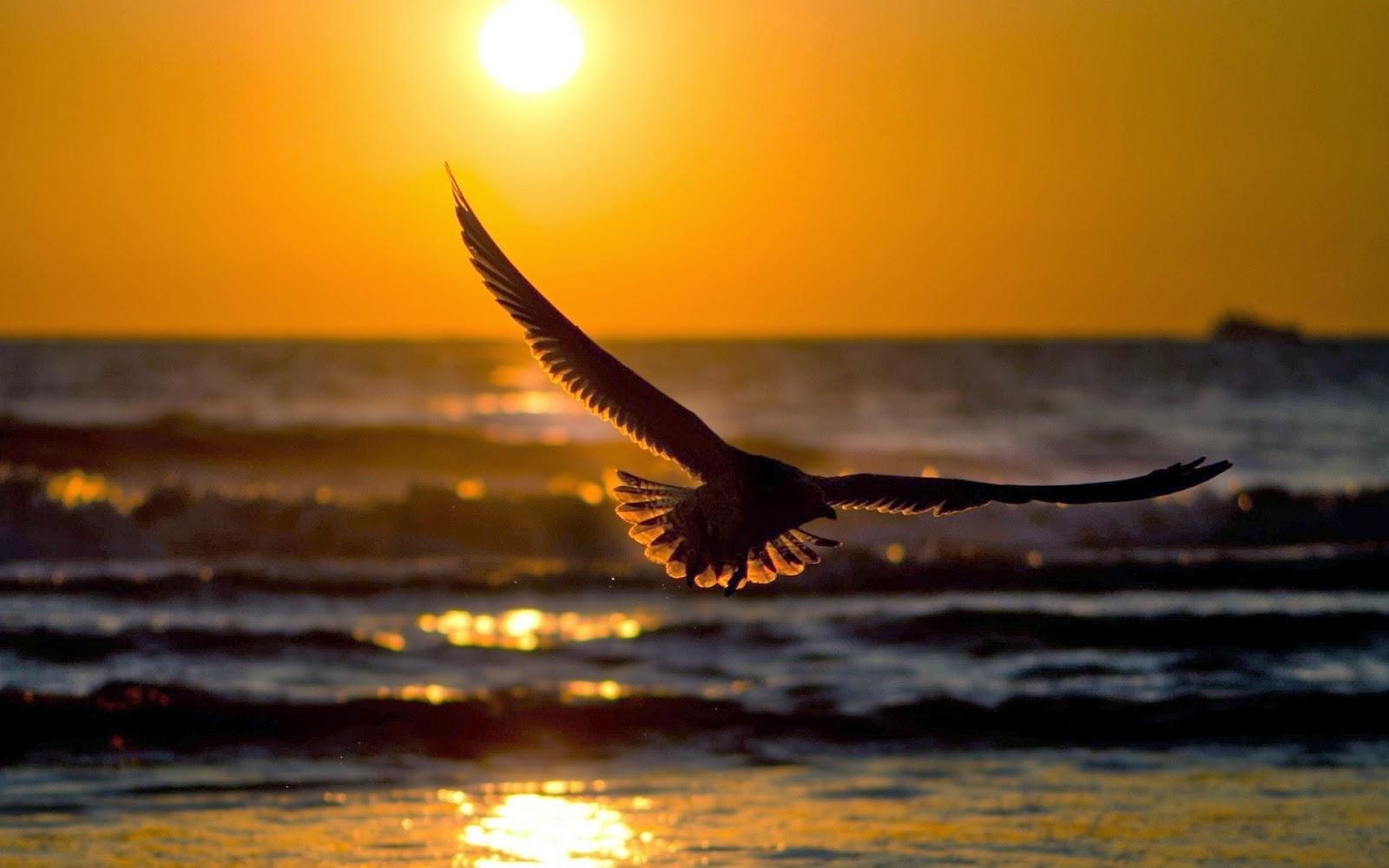 Η αγάπη είναι σαν ένα πουλί που πετάει