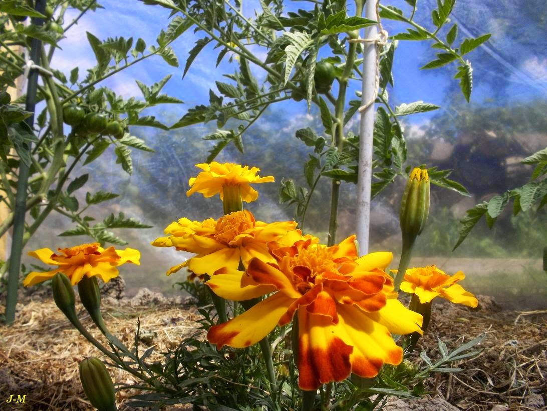 Mon jardin en moselle des fleurs au potager for Oiseaux de jardin au printemps