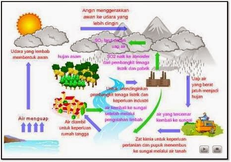 tahapan pada daur biogeokimia