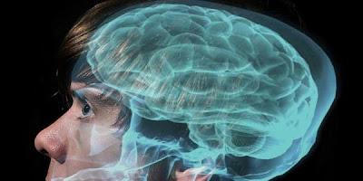 Zat Kimia Pada Otak Penyebab Maho