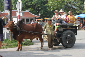 French tourists on an oxen cart in Tam Cốc