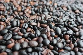 jual kopi luwak asli,harga kopi luwak