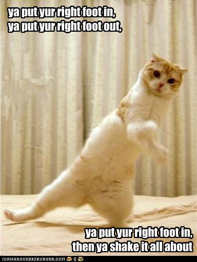 put ya right foot in put ya right foot out and ya shake it all about. Funny Animal Pics. No copyrights claimed