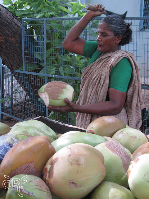 woman cutting coconuts