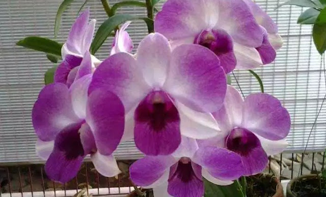 How to plant and care for plants in pots Orchid