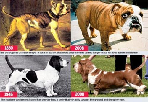 Abc Dog Breeds