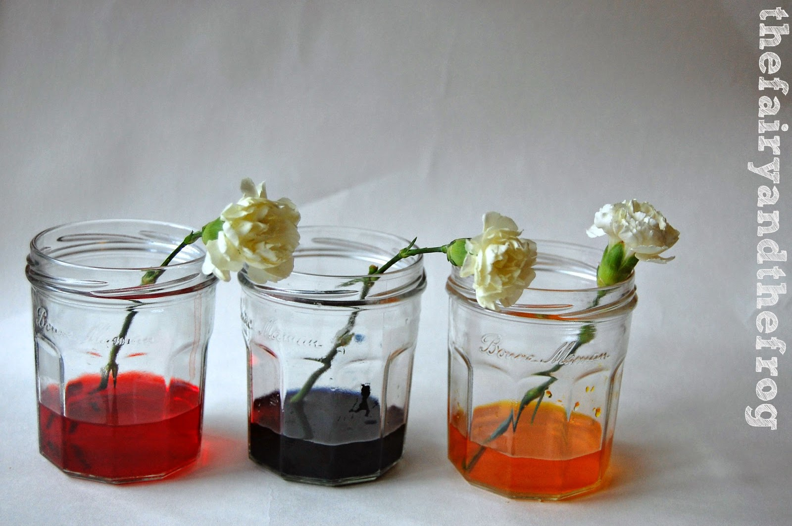 Science Project White Flower Food Coloring A K Bfo