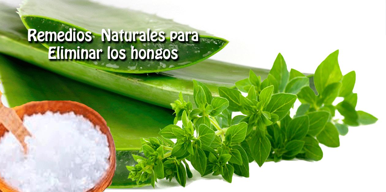 Remedios naturales para eliminar los hongos salud y belleza - Remedios caseros para la humedad ...