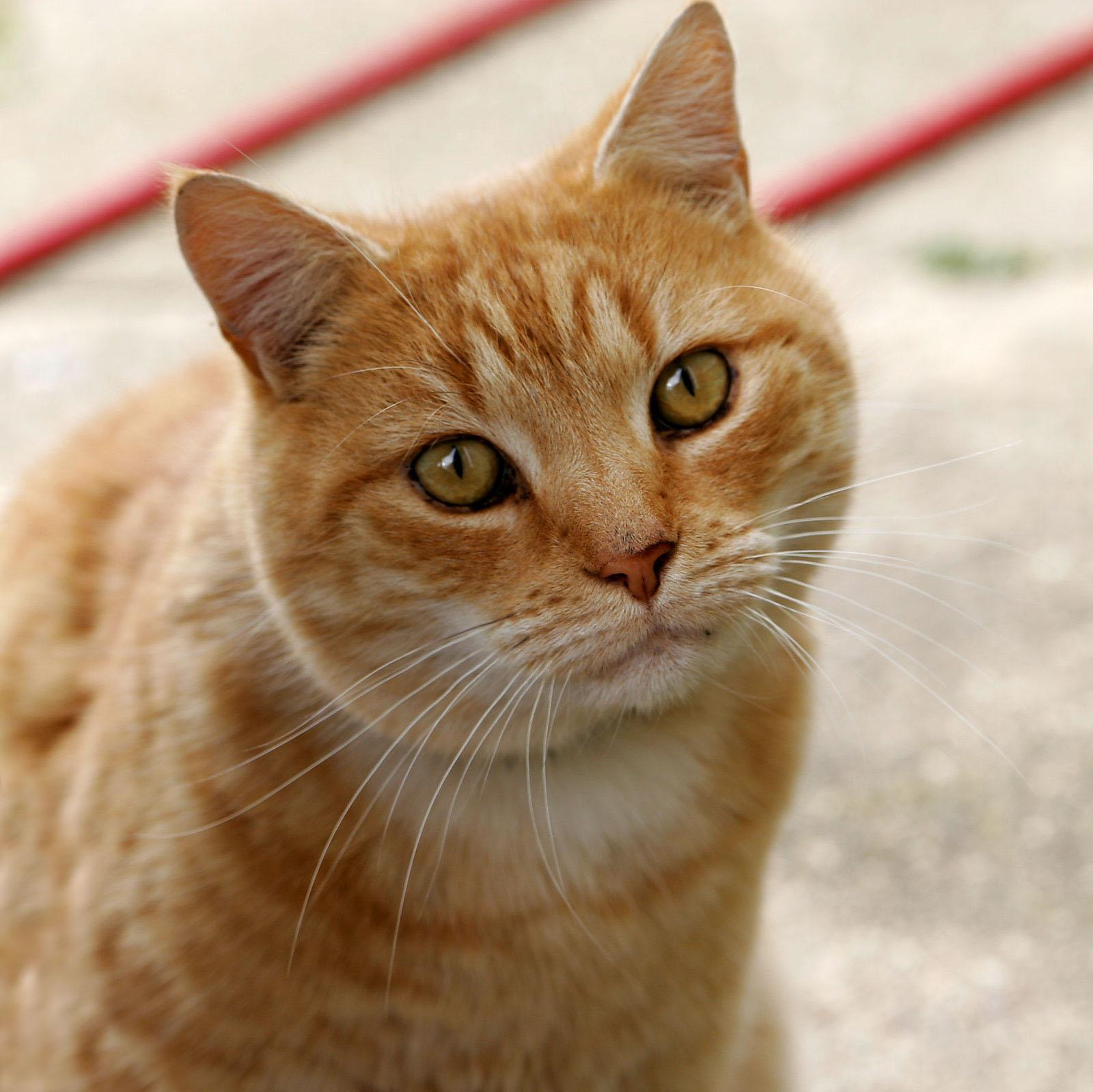 Kucing is Meong