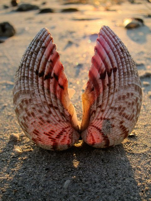 Beach Wings