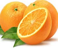 budidaya jeruk lemon