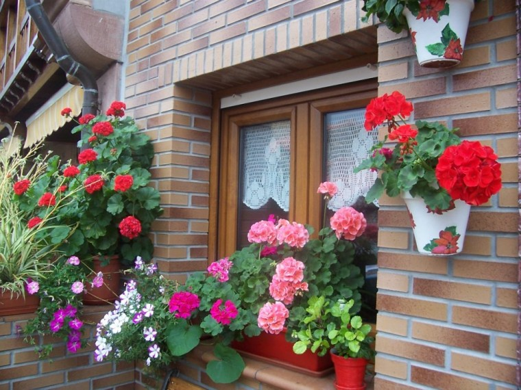 Studio floral dora santoro geranios for Plantas ornamentales con flores