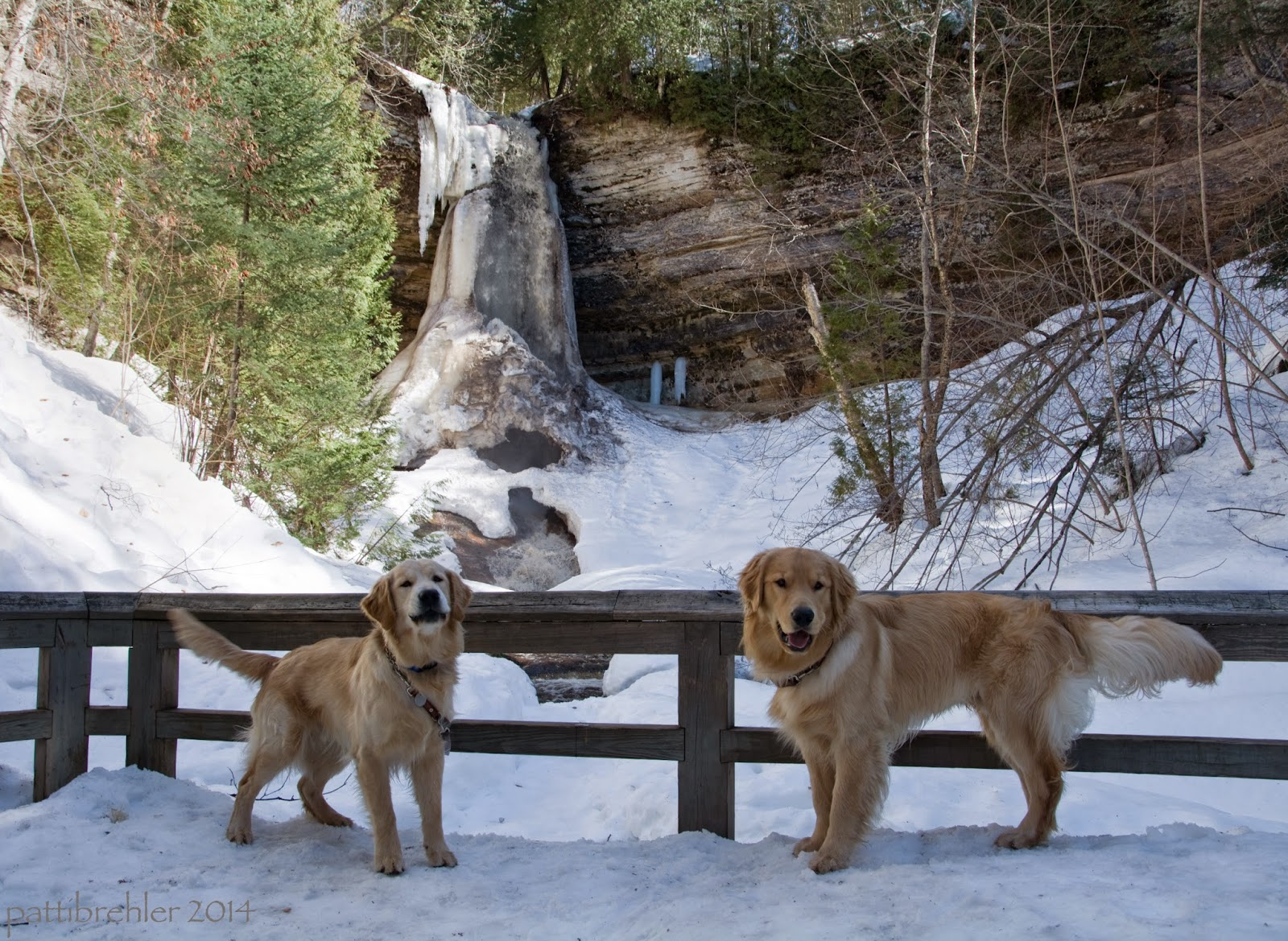 Two golden retrievers stand in front of a wooden fence, their leashes are tied to the fend. They are facing each other but are looking at the camera. There is snow all around and in the background is a tall partly frozen waterfall, coming down from a limestone cliff. There are some small fir trees to the left and bare limbed hardwood trees to the right.