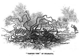 Serem Pohon ini Dapat Memangsa Manusia Sebagai Makanan
