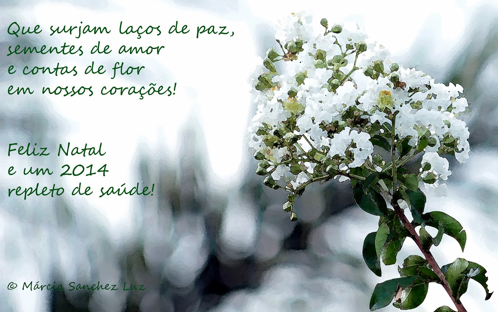 Imagem e texto de Márcia Sanchez Luz