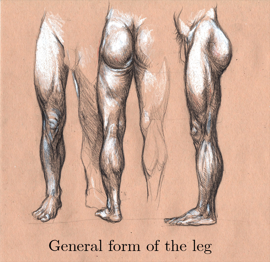 Michele Giorgi Illustrator : Anatomy Sketch: General form of the leg