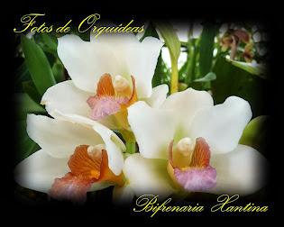 Fotos de orquideas, Album nº-1