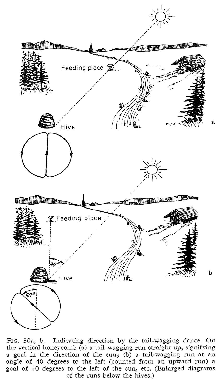Dancing Bee Diagrams - Auto Electrical Wiring Diagram •