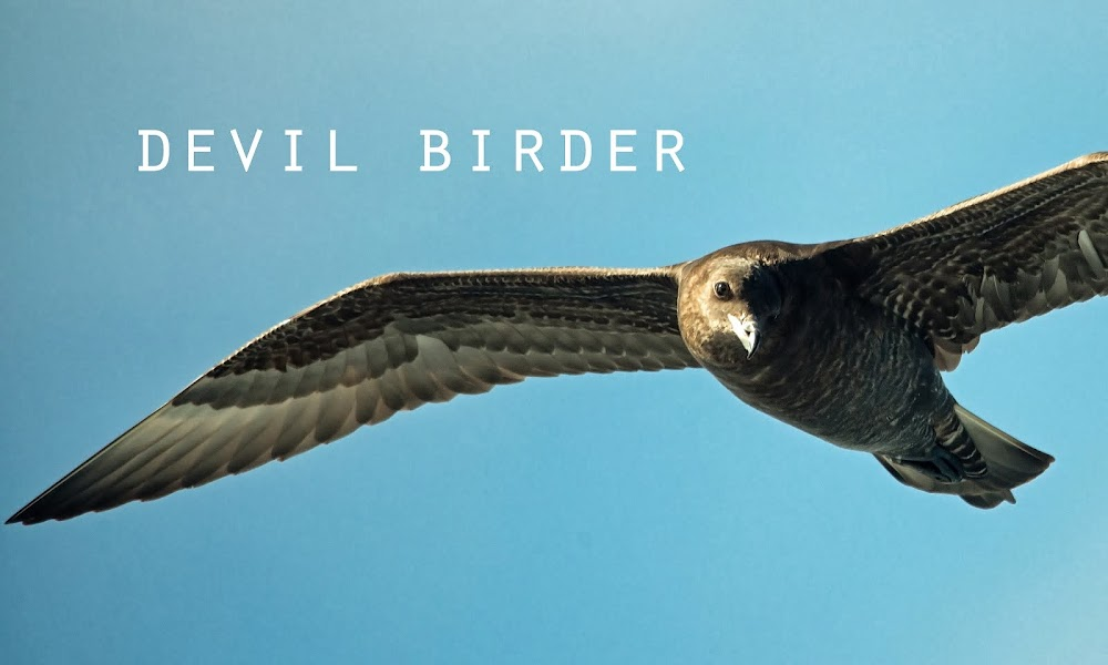 Devil Birder's blog