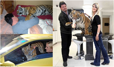 south african couple living with tiger