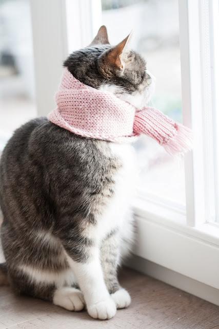 Prießnitzwickel, Halswickel bei Katzen