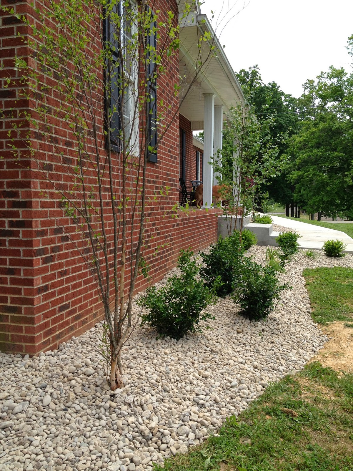 In The BeginningNo Landscaping My Kentucky Living