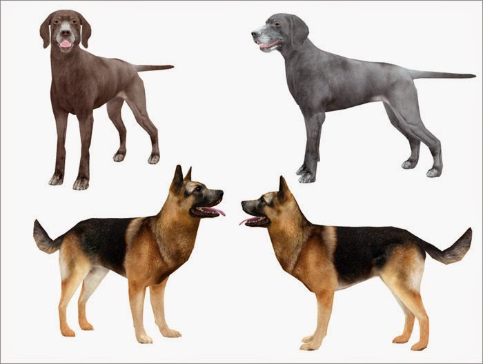 Cats And Dogs Sims  Sp