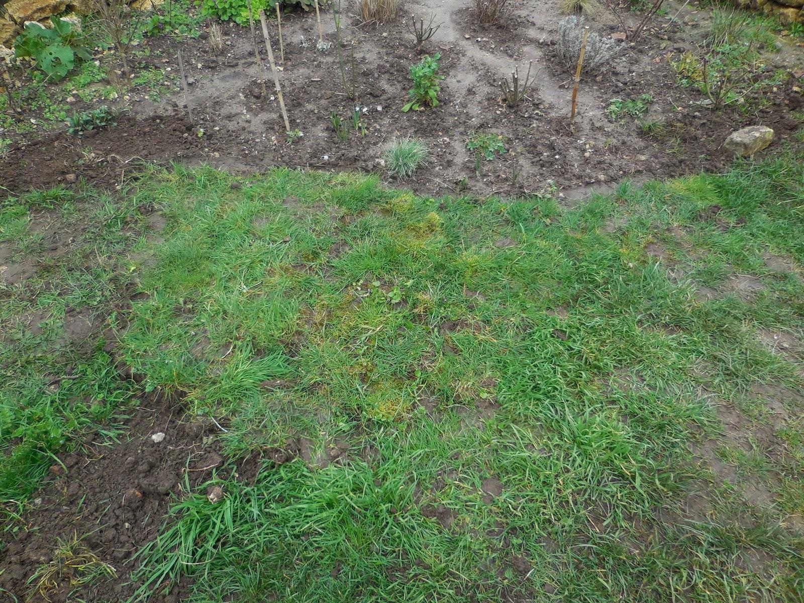 Cagouille 39 s garden plantons de la pelouse for Supprimer la mousse de la pelouse