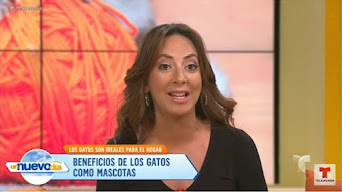 Talking about Cats on Telemundo