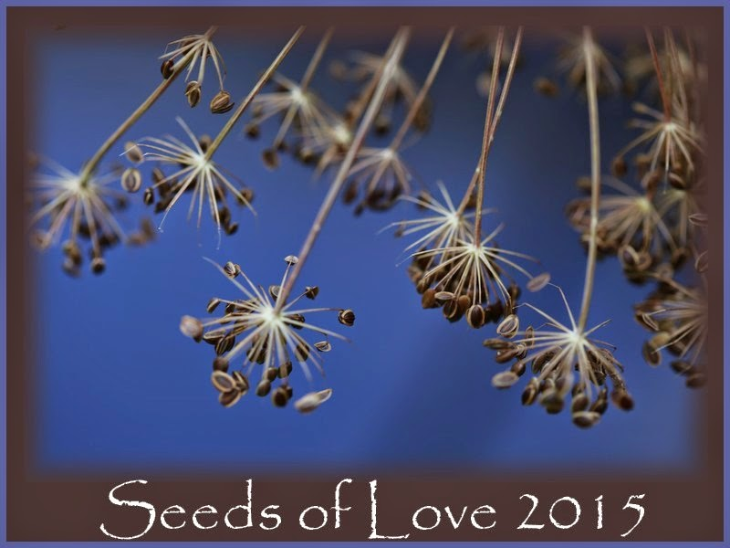 Seed of Love 2015