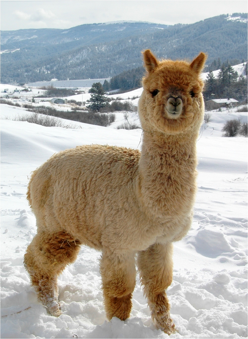Alpaca Overview  Choos...