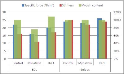 Force spécifique, rigidité et teneur en myosine (axes secondaires) du muscle extenseur des orteils et du muscle soléaire