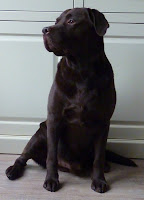 En dit is onze lieve labrador...