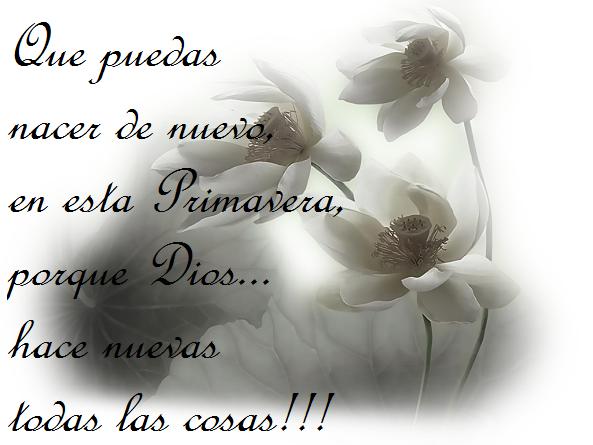 Fotos Flores Blancas Gratis - Foto gratis de flores blancas y verdes Imágenes gratis