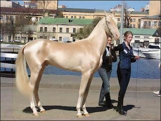 حصان شكله رائع